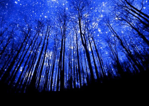 bluetreesnightsky